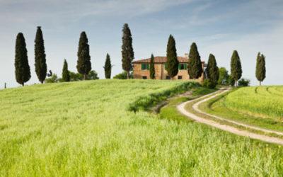 Fuori i cipressi dalla Toscana